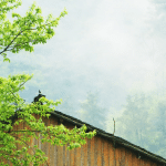 Log Home Communities