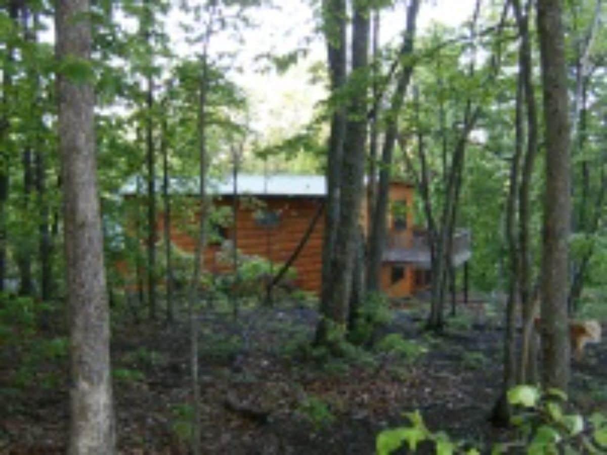 back of log home through dense trees