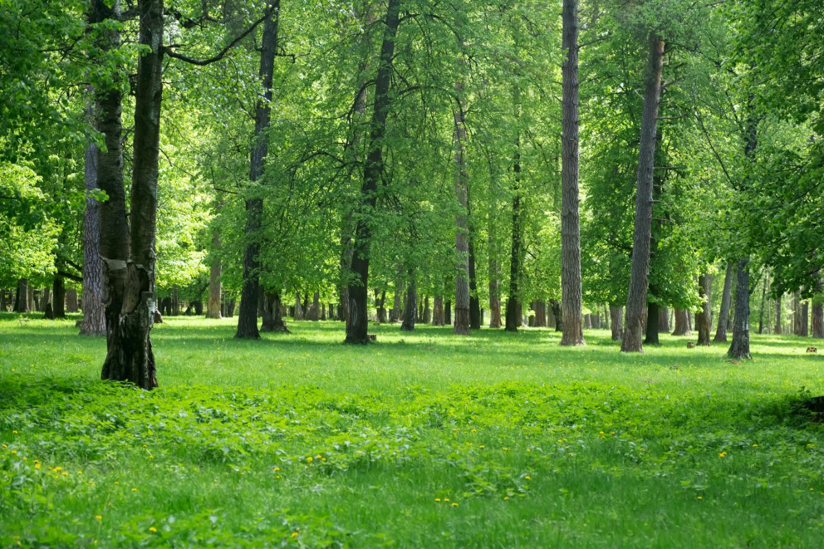 Forest during day time