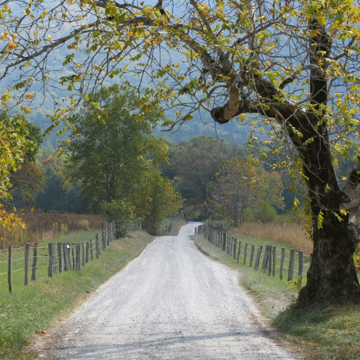 narrow road on countryside