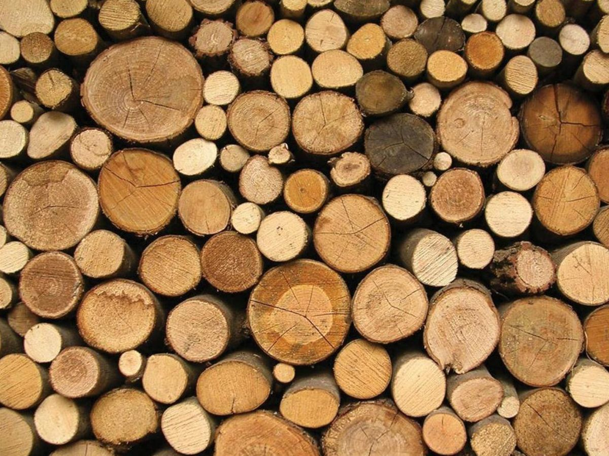 close up of a pile of log ends