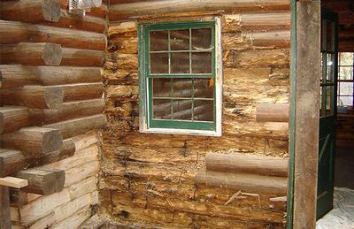 termite damages on log walls